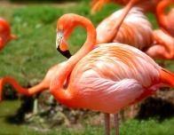Flamingo Gardens welcomes over 3,000 species of plants and animals to their 60-acres