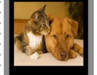 Pet friends from PetSnap