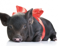 Adopt this Christmas Gift from Heifer International