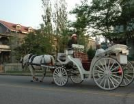 Horsedrawn Carriage Ride in Cape May, New Jersey