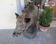 Boar at Falorni