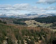 England_Grizedale_highlands