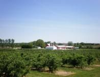 Edward's Apple Orchard West in Illinois.