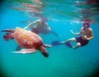 galapagos-guests-seaturtle-c-Cindy-Manning