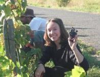 Les Vendanges - Picking Wine Grapes