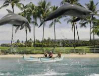 hilton-waikoloa-dolphins