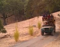 safari-west-tours