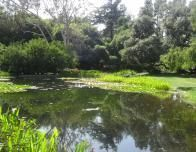trip to old pasadena, norton simon garden_0