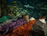 Shark Sleepover at National Aquarium, Baltimore, Maryland