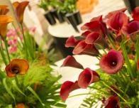Keukenhof opens its greenhouses in spring