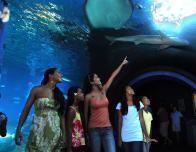 Maui Ocean Center Ray Sharks