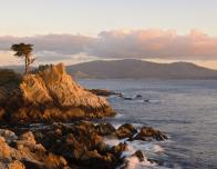 Lone Cypress on Monterey Peninsula, photo by Joann Dost