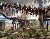 Carnegie Museum of Natural History, Pittsburgh