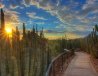 Desert Botanical Garden is open for sunset tours.