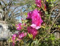 Flowers Bloom in Savannah's Graveyards