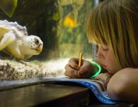 Girl playing scavenger hunt game at National Aquarium
