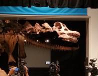 Titanosaur at American Museum Natural History, NY