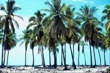 palmtrees_280673211