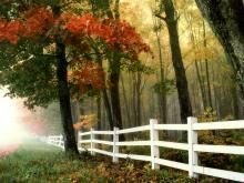 Take an early morning stroll through the Fall leaves